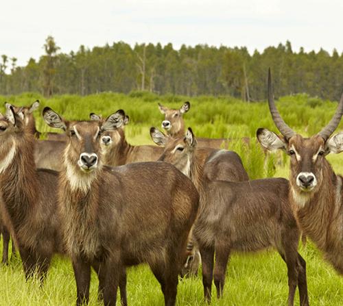 Photo of Safari Wilderness Ranch