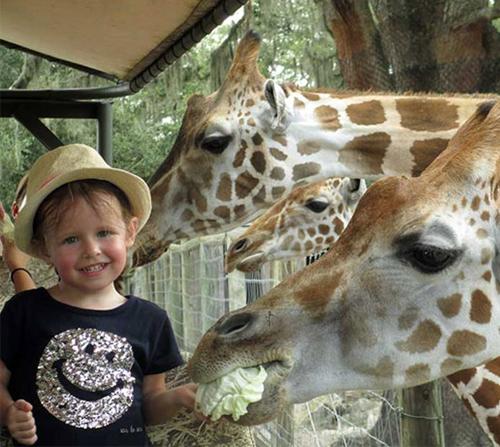 Photo of Giraffe Ranch