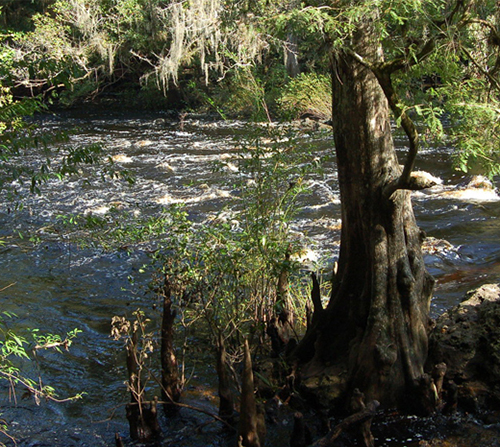 Photo of Hillsborough River State Park