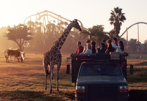 Photo of $10 Off Admission at Busch Gardens Tampa