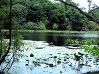 Al Lopez Park Image