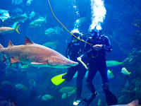 Meet our Divers in the Coral Reef Gallery